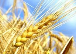 Avenir de l'Agriculture, de l'Alimentation et de la Forêt - 2e lecture