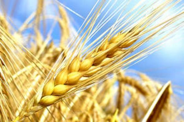 Revalorisation des pensions de retraites agricoles