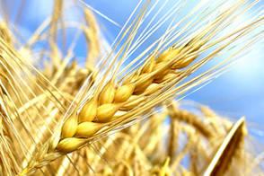 Avenir de l'Agriculture, de l'Alimentation et de la Forêt